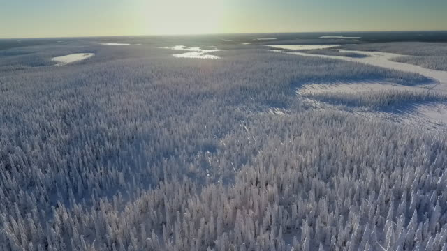 finnish lapland aerial footage - heavy snow forest - svezia video stock e b–roll