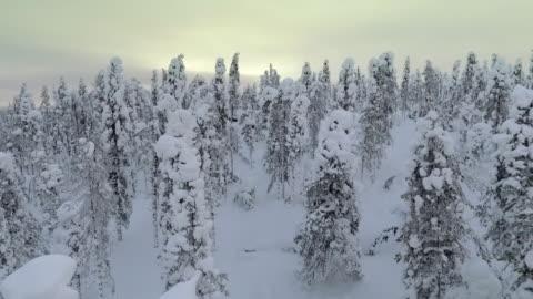 vídeos y material grabado en eventos de stock de imágenes aéreas de la laponia finlandesa - bosque de nieve - sweden