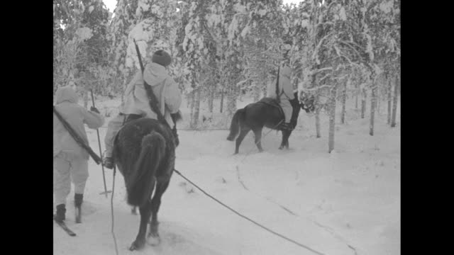 vs finnish soldiers wearing white camouflage on skis sliding through snow with several others being towed behind horses and moving into woods / the... - finlandia video stock e b–roll