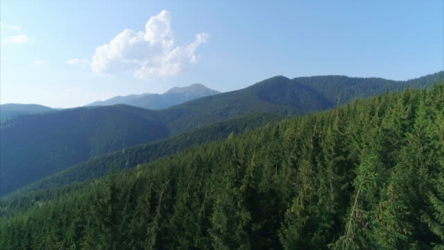 fir tree forest over mountains seen from above - fir tree stock videos and b-roll footage