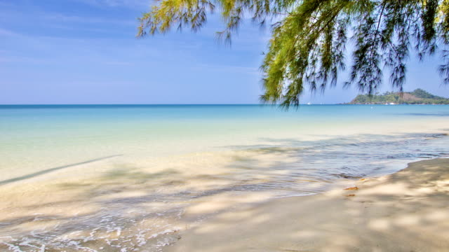 fir tree over beach - fir tree stock videos and b-roll footage