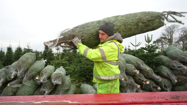 fir trees are passed through a netting machine at york christmas trees on november 23, 2020 in york, england. york christmas trees have this year... - christmas tree stock videos & royalty-free footage