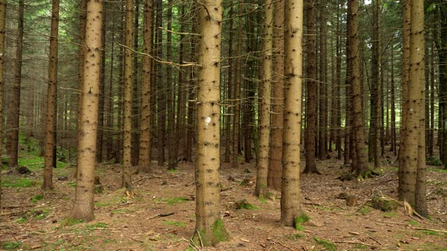 fir trees inside a big forest - coniferous stock videos & royalty-free footage