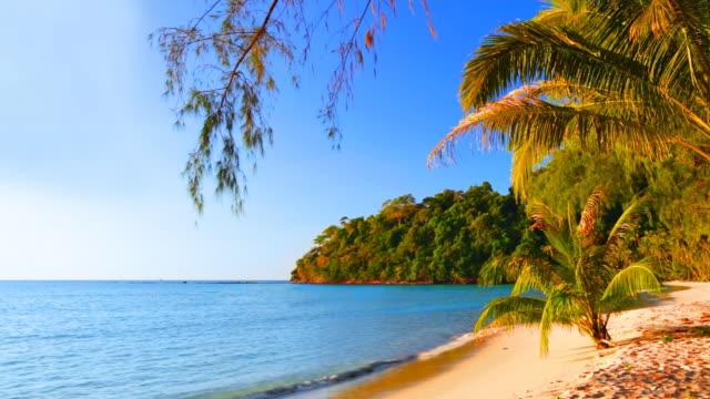 Fir twig over sea and palm tree beach