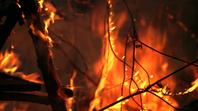 fire burning down the forest - the end stock videos & royalty-free footage