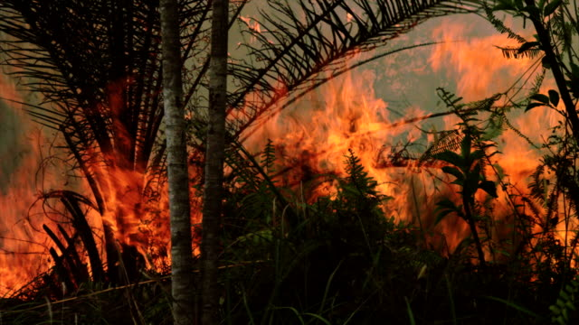 fiamme di fuoco nella foresta - fire natural phenomenon video stock e b–roll