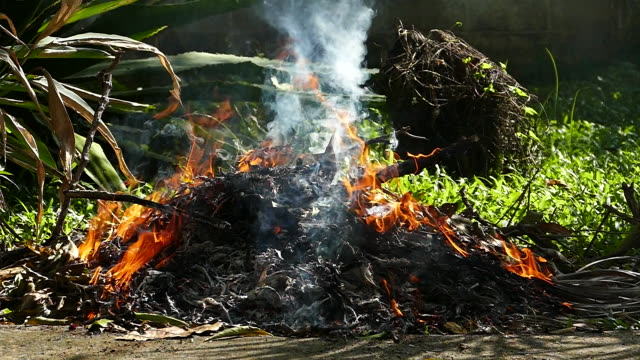 fire burning grass and dry leaves in garden - turf stock videos & royalty-free footage