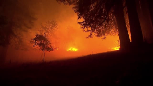 fire burning trees in napa, california, part of the 2017 fires in northern california that killed many in sonoma, mendocino, napa and yuba counties. - produced segment stock videos & royalty-free footage