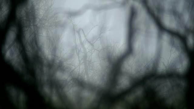 stockvideo's en b-roll-footage met fire. forest. - kleurtoon
