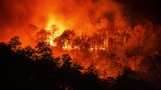 t/l fire forest wildfire timelapse - climate change stock videos & royalty-free footage