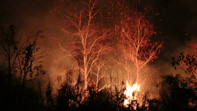 fire grass near a dry tree during the night. - ash stock videos & royalty-free footage