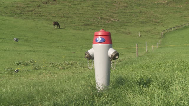 vídeos de stock, filmes e b-roll de ms fire hydrant / schwende, appenzell innerhoden, switzerland - animal de trabalho