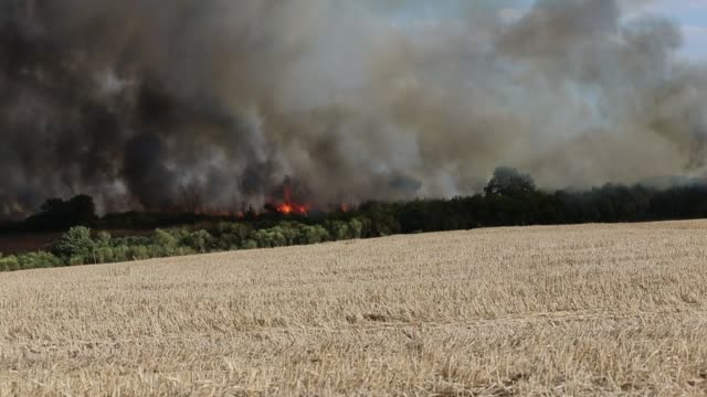 fire in anguillara - stubble stock videos & royalty-free footage