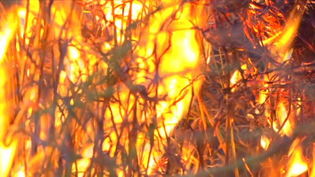 vídeos de stock, filmes e b-roll de fire in the amazon rainforest - chama