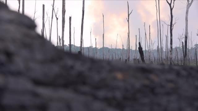 fire in the amazon rainforest - amazon region stock videos & royalty-free footage