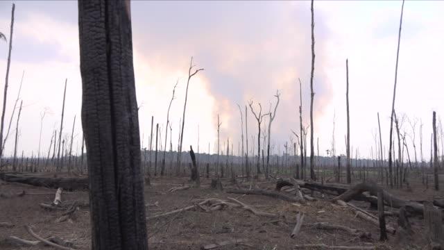 vídeos de stock, filmes e b-roll de fire in the amazon rainforest - destruição