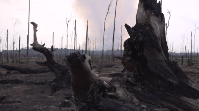fire in the amazon rainforest - destruction stock videos & royalty-free footage