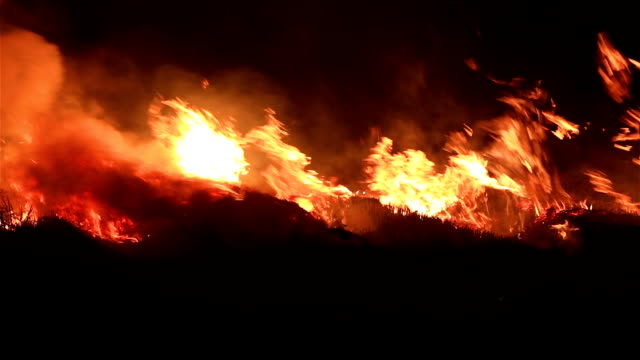 Fire in the Cornfield After Harvest. Burning Biomass.