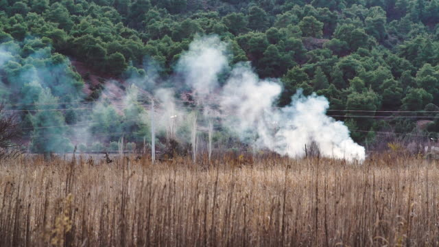 fire in the dry reed grass field - loss stock videos & royalty-free footage
