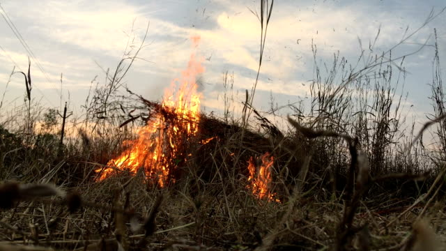 fire in the field - smog stock videos & royalty-free footage