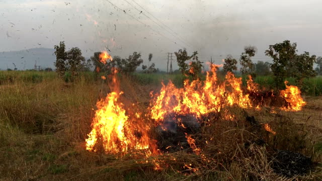 fire in the field - stubble stock videos & royalty-free footage