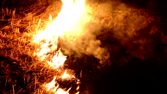 fire in the forest at night - inferno stock videos and b-roll footage