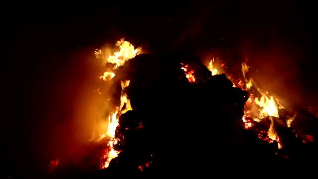 夜森を火します。 - 可燃性点の映像素材/bロール