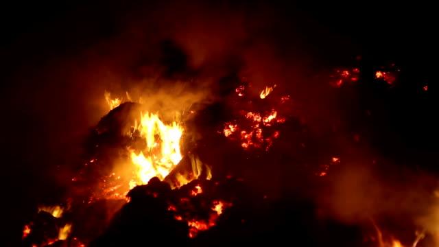 vidéos et rushes de le feu dans la forêt pendant la nuit - image contrastée