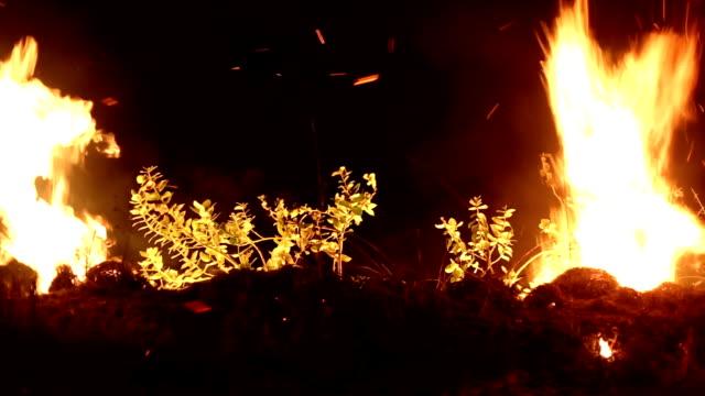 vídeos y material grabado en eventos de stock de fuego en el bosque por la noche - contraste alto