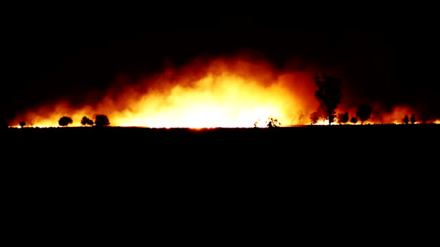 Fire in the forest at night