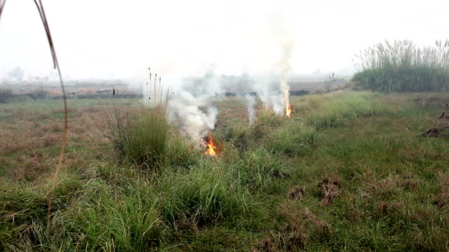 Fire in the grass