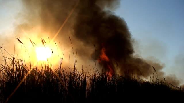 vídeos de stock, filmes e b-roll de caminhão de cana-de-açúcar - sugar cane