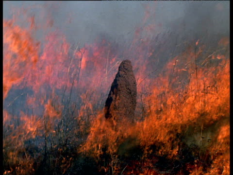 Fire sweeps over grassland and termite mound