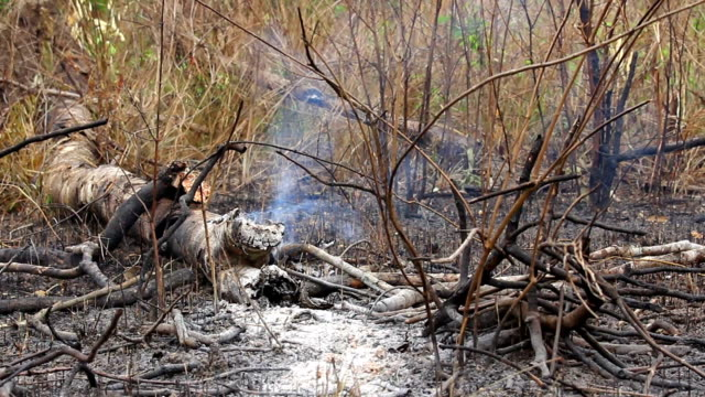 fire weather - named wilderness area stock videos & royalty-free footage