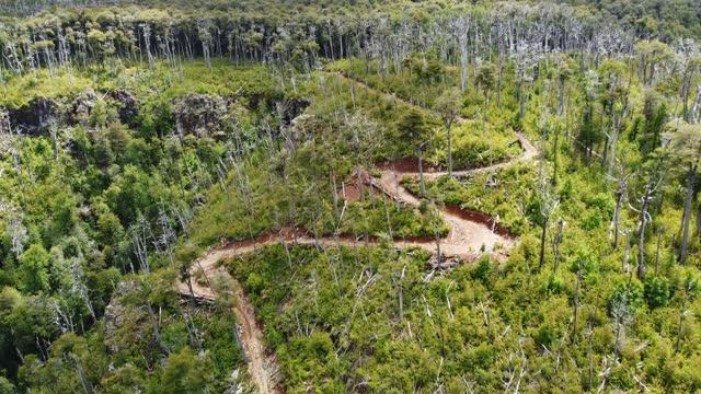 vídeos y material grabado en eventos de stock de incendios en las montañas del parque nacional tolhuaca - the nature conservancy