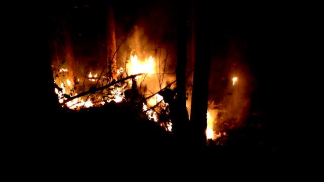 vidéos et rushes de pompier tente d'arrêter les feux de forêt - brasier