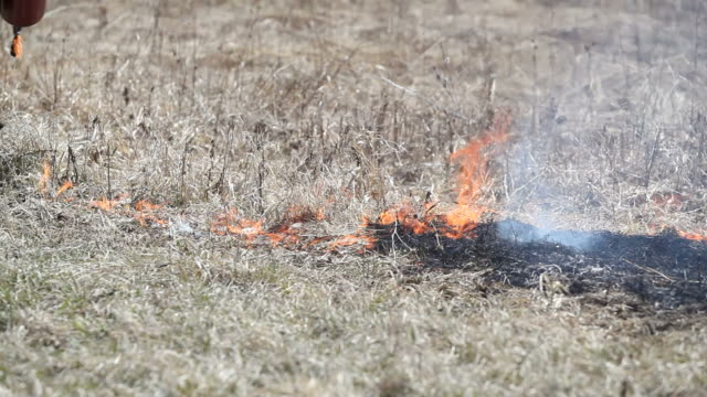 Firefighter Using a Drip Torch to Ignite Dried Grass