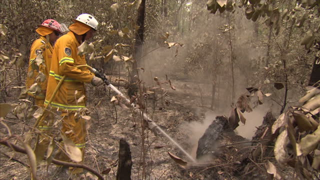 vídeos y material grabado en eventos de stock de firefighters are trying to contain 100 bushfires in the eastern australian state of new south wales. despite a dip in temperatures fires are also... - australia