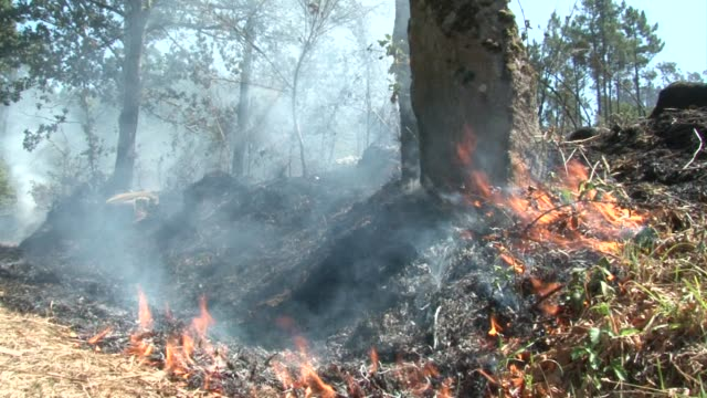 firefighters in portugal have tamed a major blaze but were on alert saturday for further outbreaks of wildfires which have already claimed five lives... - tame stock videos & royalty-free footage