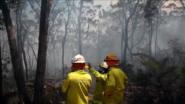 firefighters prepare to battle approaching flames from a bushfire near faulconbridge in the blue mountains on october 24 2013 clean australia fires... - firefighter stock videos & royalty-free footage