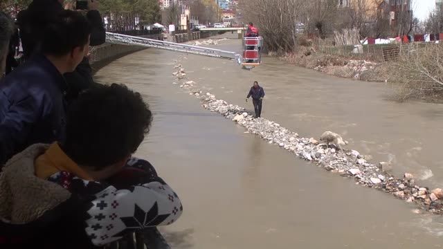 firefighters rescue 2 out of 3 dogs that are stuck in coruh river in bayburt turkey on april 15 2017 firefighter teams of babyburt municipality... - step ladder stock videos & royalty-free footage