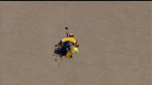 ktla firefighters rescue dog from flooded los angeles river in vernon - 解放する点の映像素材/bロール