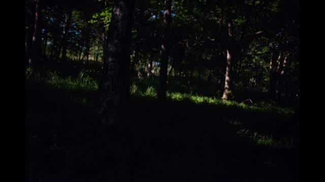 fireflies dancing in a forest - グローワーム点の映像素材/bロール