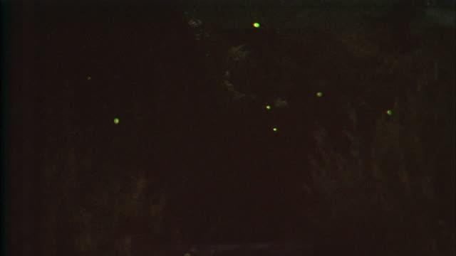 vídeos de stock e filmes b-roll de fireflies flash their lights while flying over ichinosaka river. - pirilampo escaravelho