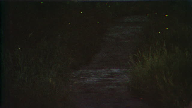 vídeos de stock e filmes b-roll de fireflies flash their lights while flying over the ichinosaka river. - pirilampo escaravelho