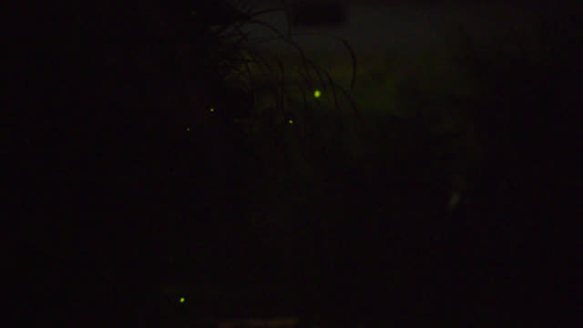 vídeos de stock e filmes b-roll de fireflies fly over stream at edge of village, japan. - pirilampo escaravelho