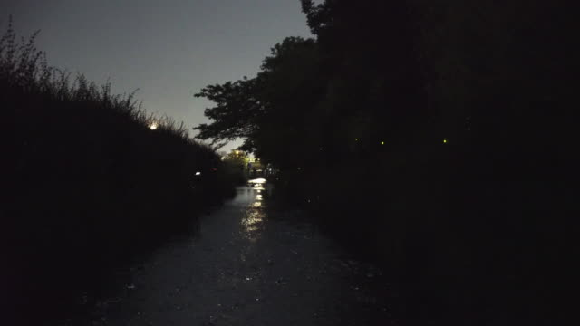 fireflies in kyoto - low lighting stock videos & royalty-free footage