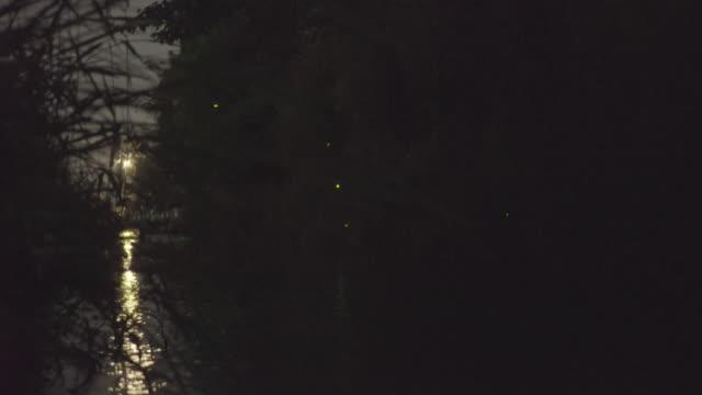 vídeos de stock, filmes e b-roll de fireflies in kyoto - pouca luz