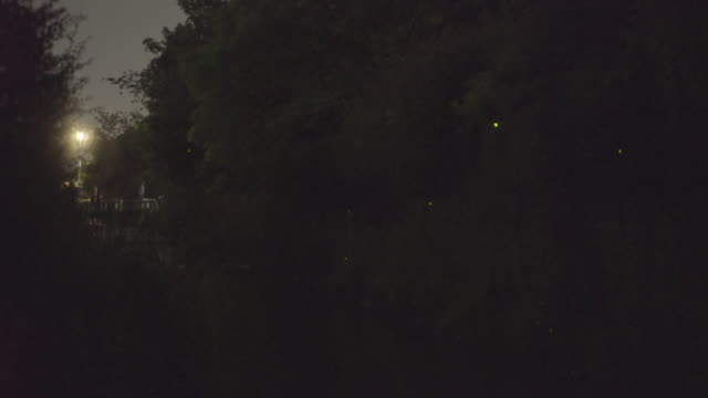 fireflies in kyoto - 蛍点の映像素材/bロール