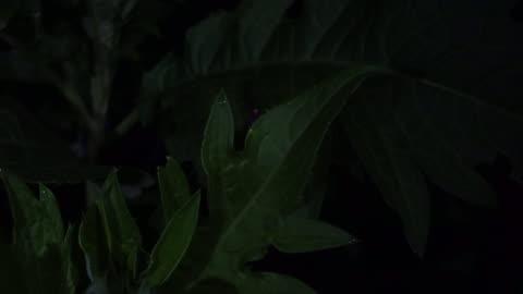 stockvideo's en b-roll-footage met fireflies  park in nagano - japan - vuurvliegje